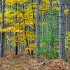 Hiawatha National Forest in Fall