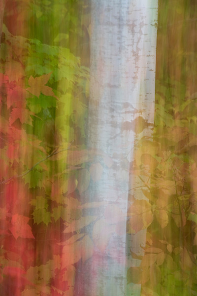 Fall Abstract Two