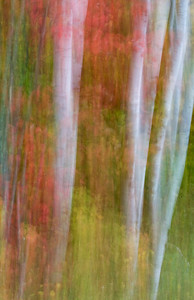 Fall Abstract One