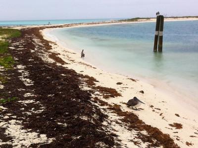 Project Week: Key West