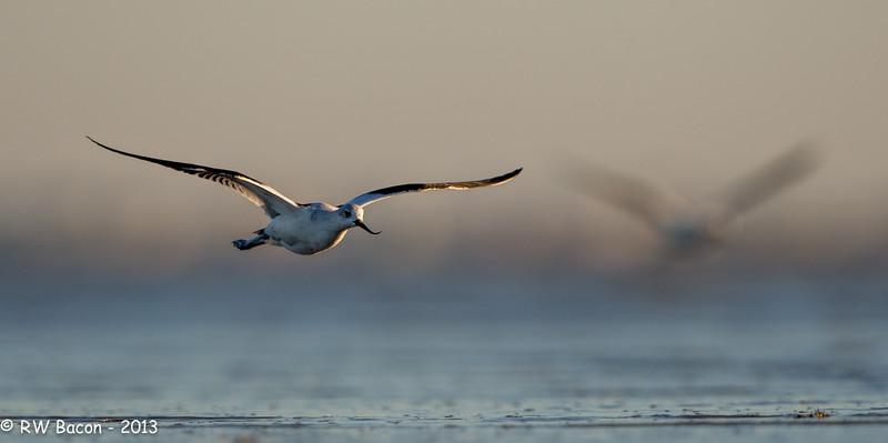 Avocet Ghost Flight