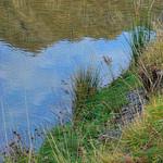 Moke Lake - Upscaled Detail
