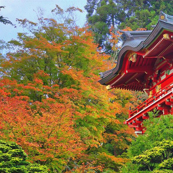 Japanese Tea Garden - Upscaled Detail #2