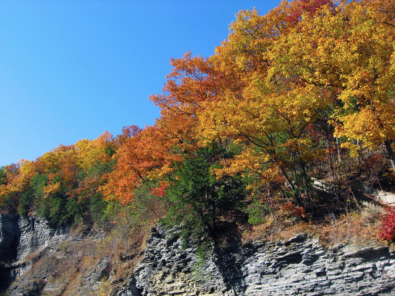 Foliage on the Bluff