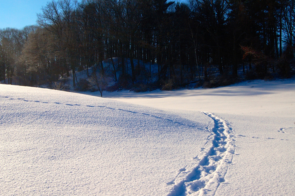 Snow Shoe Track - Durand Golf Course
