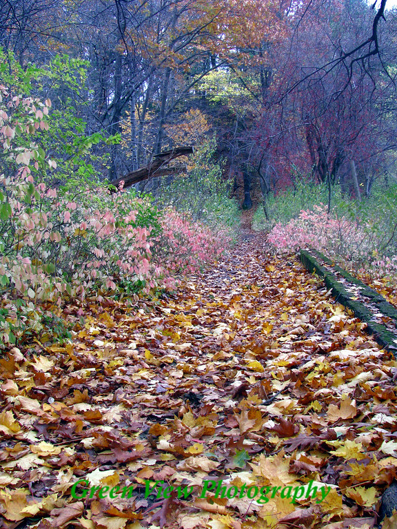 Colorful Trail