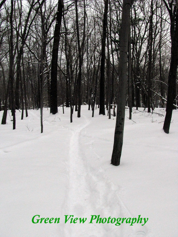 Winter Path to Grammy's