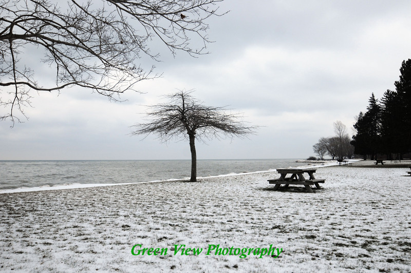 Lone Tree - Hamlin Beach