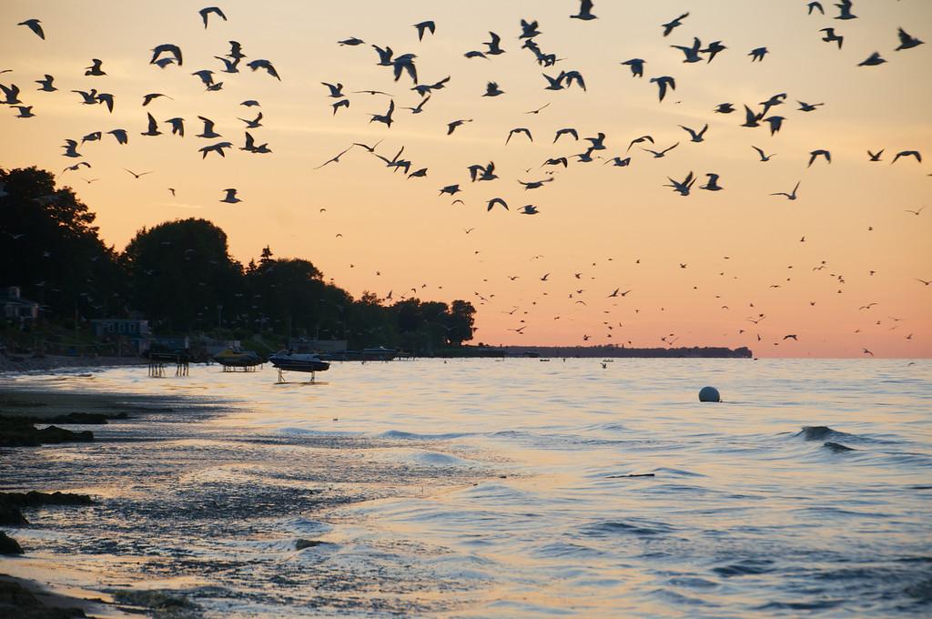 Seagulls over Charlotte Beach