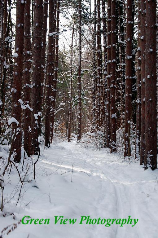 Webster Park Ski Trail