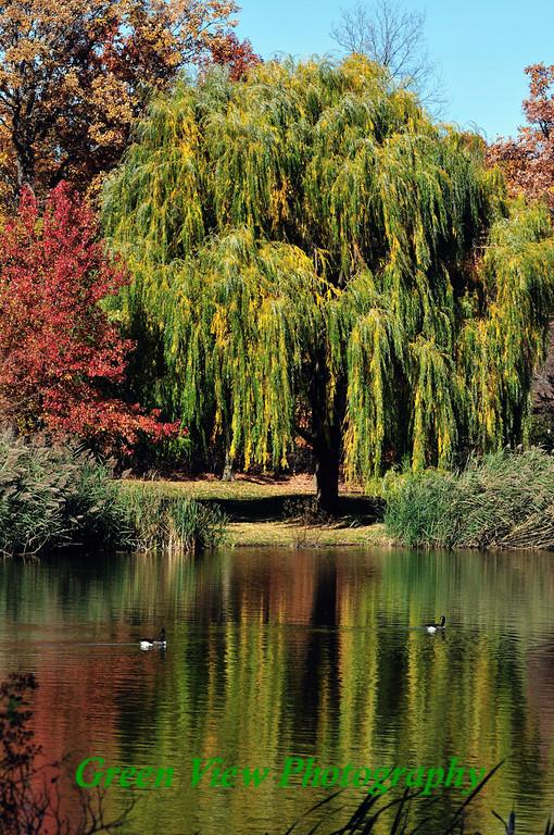 Seneca Park Willow Reflection