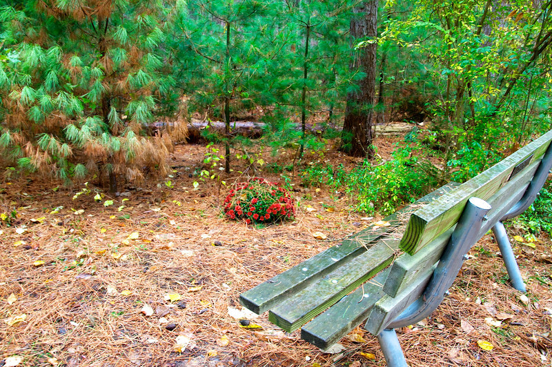 Bench and flowering plant in Webster Park