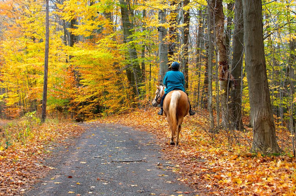 Horse walking the road in Webster Park