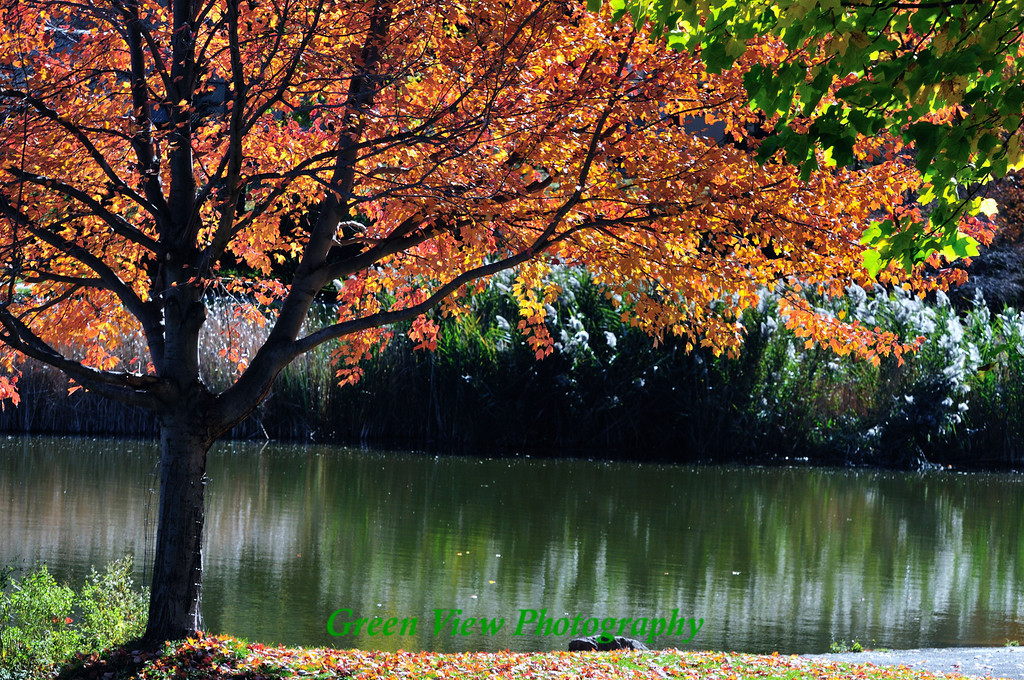 Seneca Park Autumn