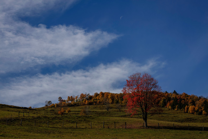 Tree In Fall Colors, Downsville New York
