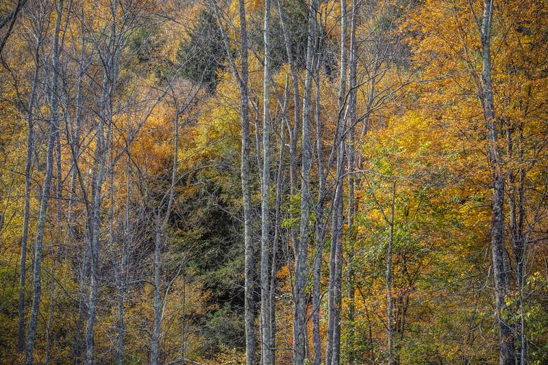 Trees In Fall, Catskills New York