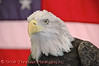 Sam the Eagle from the Raptor Project at the New York State Fair in Syracuse, New York.