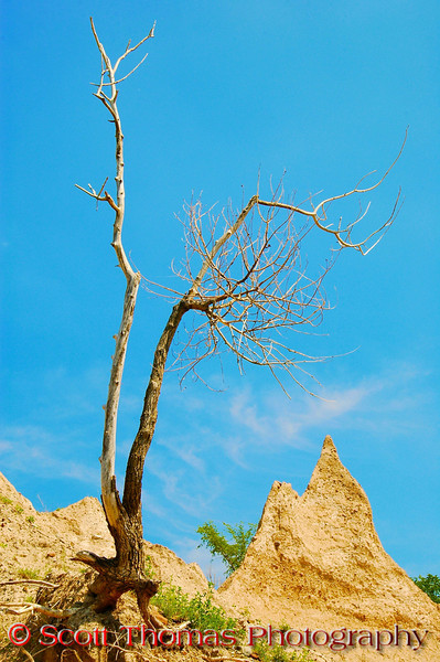 A tree holds on to life in the Chimney Bluffs State Park near Sodus, New York.