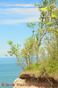 The bluffs erode one to five feet each year even as trees cling to the cliff edges in Chimney Bluffs State Park near Sodus, New York.