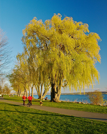 A couple walking their dogs past weeping willow trees on the shore of Onondaga Lake in Onondaga Lake Park, Liverpool, New York.