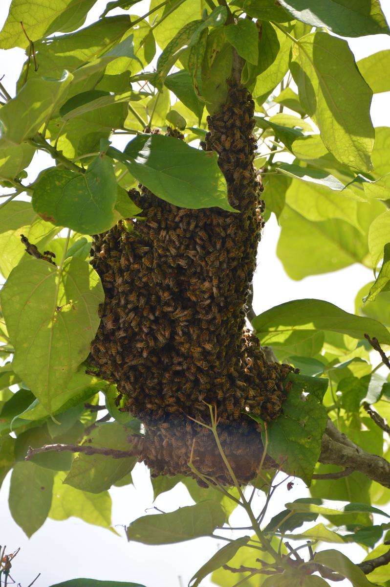 Upton's Bees