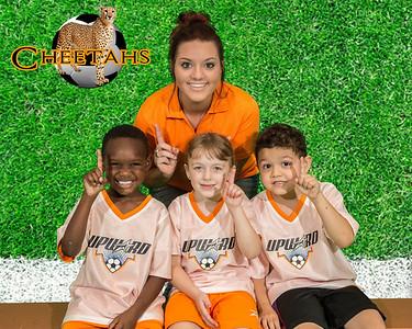 Cheetahs2