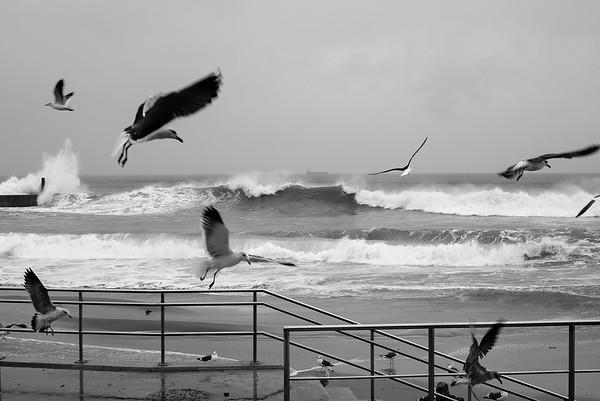 Seagulls & Boardwalk