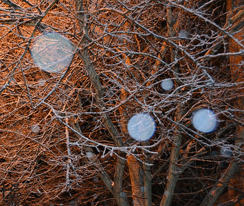 02-13-14 Orbs were abundant on my magical walk in fresh urban snow.  No edits other than cropping.