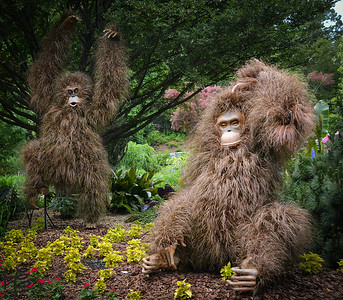 05-09-14 The furry apes seem right at home in the gardens.