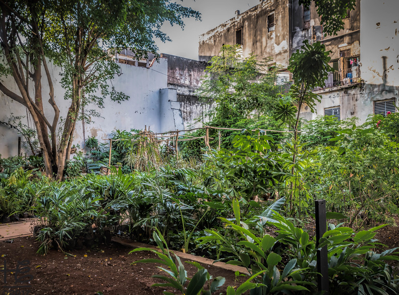 Urban garden in building ruins