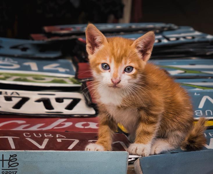 Adorable street kitten