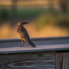 Bird in golden light
