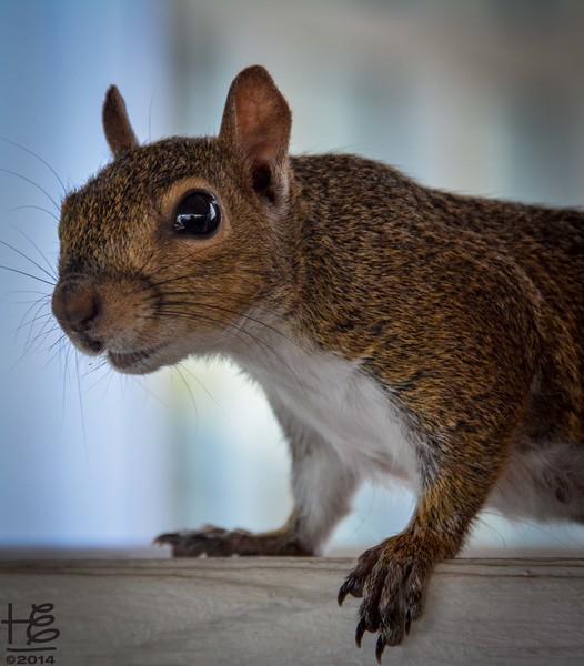 The friendly squirrel was micheivious