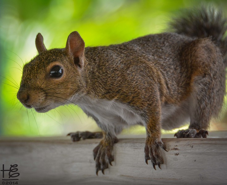 A friendly squirrel poses