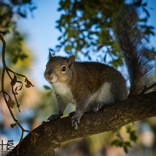 Squirrel on branch