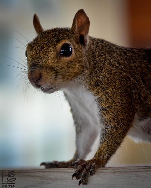 A profile picture of squirrel