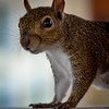 A profile picture of squirrel