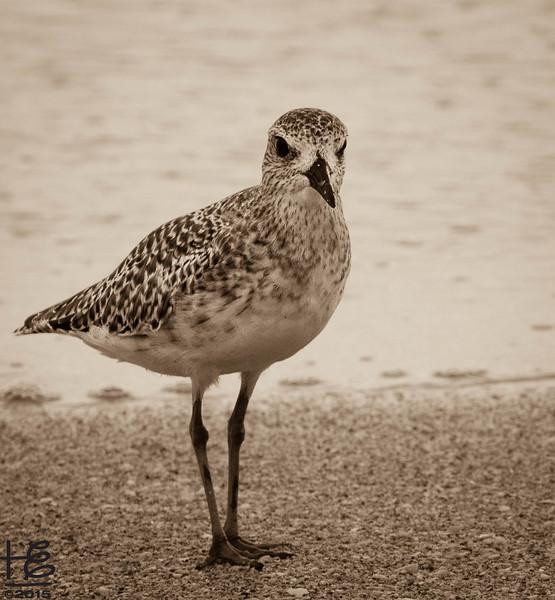 Seashore bird posing