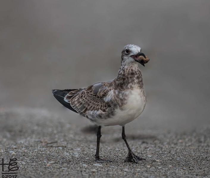 Seashore bird