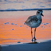 Sweet bird poses
