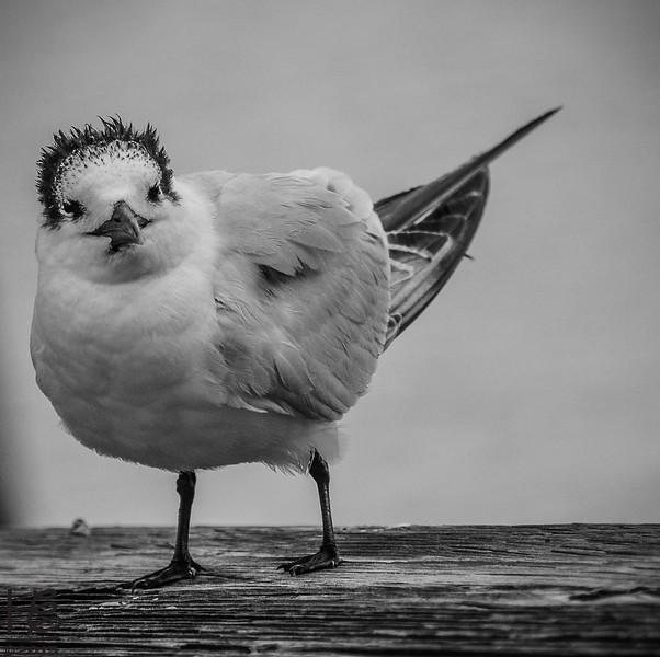 b&w bird on railing