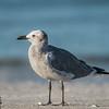 Sea gull on beach