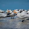 flock of seashore birds
