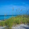 Sea Oats on Gulf