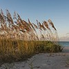 Sea oats in golden light