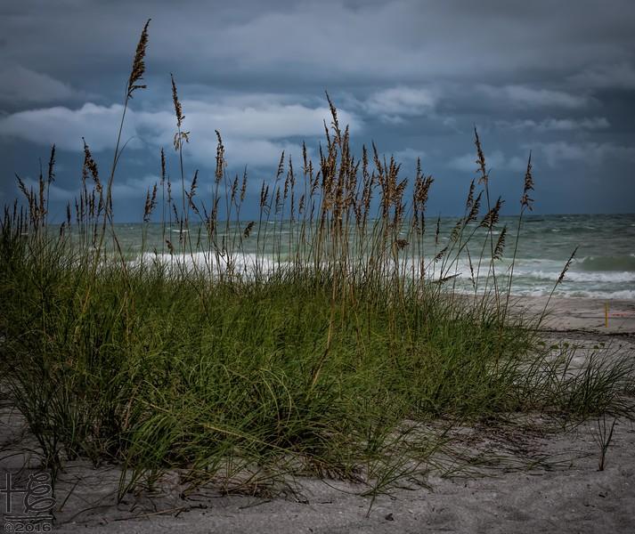 Sea oats on stormy beach