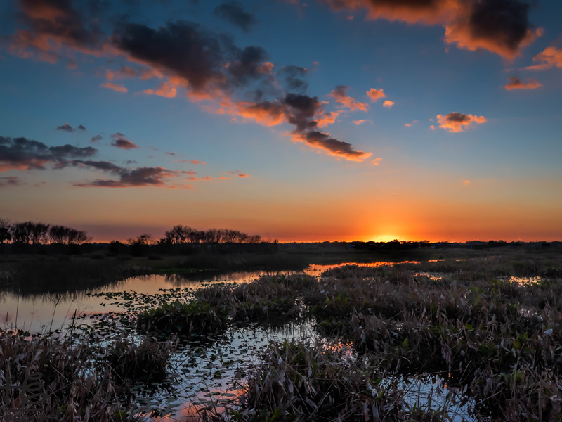 Sunset at The Celery Fields