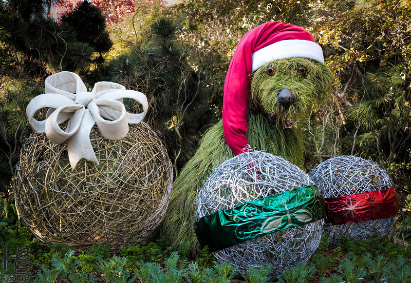 Hairy dog in holiday attire