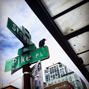 Pike Place Starling, March 2016