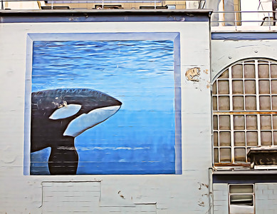 Orca Art on the Wall
